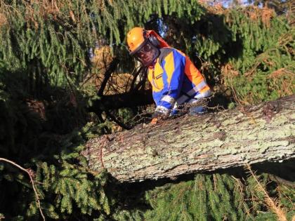 В центре Москвы упало дерево