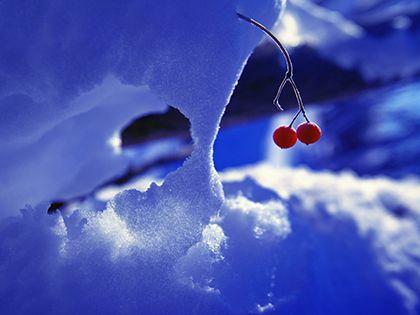 На холоде не распространяются вредные бактерии.