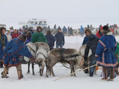 Оленеводы со всего Ямалы приехали, чтобы поучаствовать в Арктической Олимпиаде