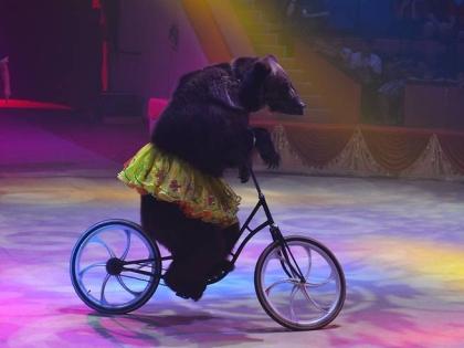 Премия «Мастер» не имеет аналогов в цирковом мире