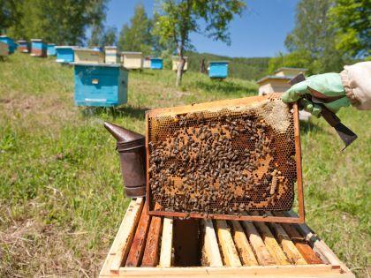 Гости деревушки могут полакомиться экологически чистым медом