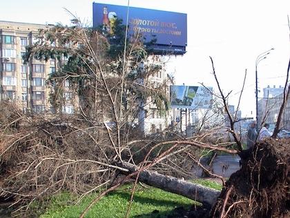 Сильный ветер повалил около 30 деревьев в Москве