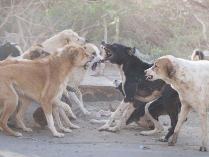 Район Москвы закрыт на карантин из-за бешеной собаки