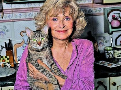 У «мамы» «Аншлага» семь кошек. Зимой она подкармливает всех бродячих котов в округе
