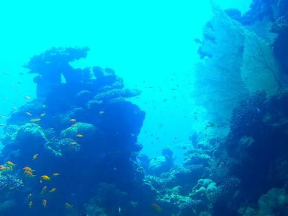 Флора и фауна Красного моря вокруг вас