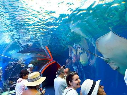 В стеклянном коридоре обитатели Красного моря наблюдают за посетителями
