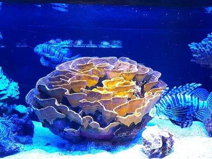 Фотография на память о необыкновенных красотах подводного мира