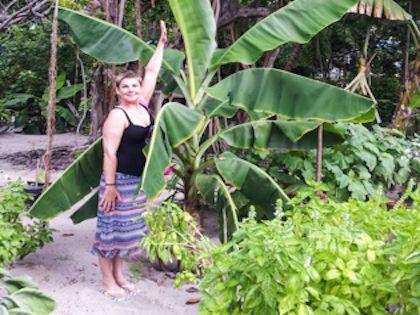Банановые пальмы в больших количествах растут на островах
