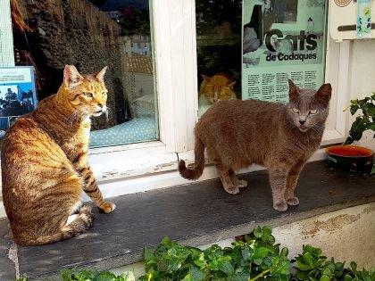Коты — негласный символ Каталонии