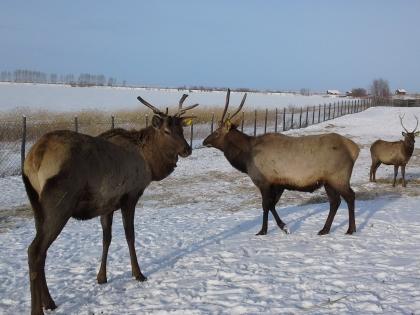 Зимний Алтай