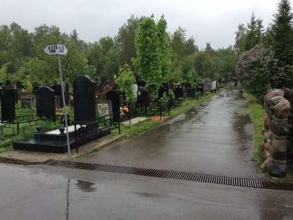Дождь все шел, и единственным живым существом в округе был кладбищенский пес...