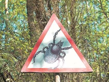 Риск укуса клеща из-за теплой зимы вырос вдвое