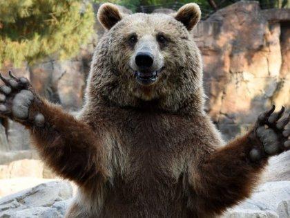 Медведь напал в Забайкалье на грибника