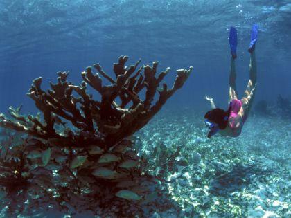 Риф на Мальте