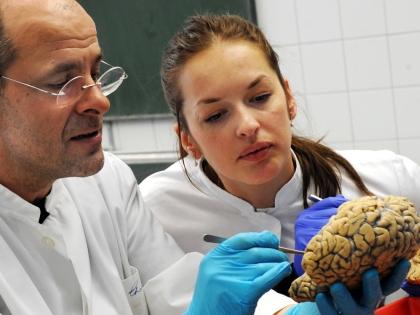 Ученые с моделью человеческого мозга
