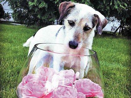 собака от Пугачёвой