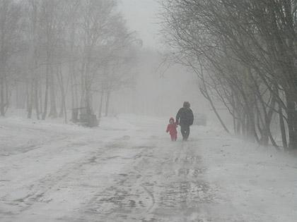 Сильный ветер уже нарушил электроснабжение ряда посёлков Калининградской области