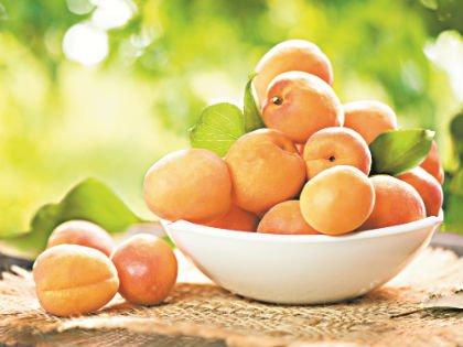 Научное название абрикоса по Линнею – Prunus armeniaca, то есть армянская слива