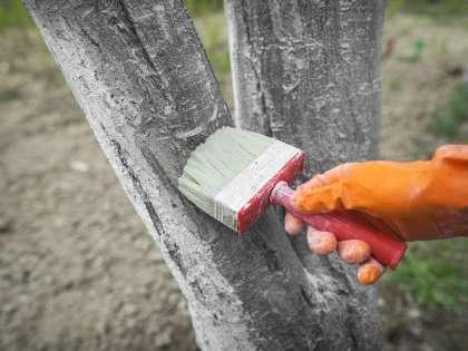 К химобработке деревьев нужно подходить крайне осторожно