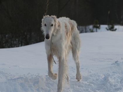 С помощью притравок владельцы собак поддерживают своих собак в тонусе