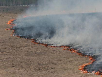 Сжигать сухую траву запрещено на сельскохозяйственных полях и возле дорог в целях предупреждения пожаров