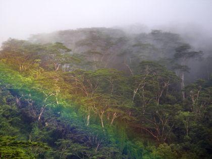 Дождевые тропические леса