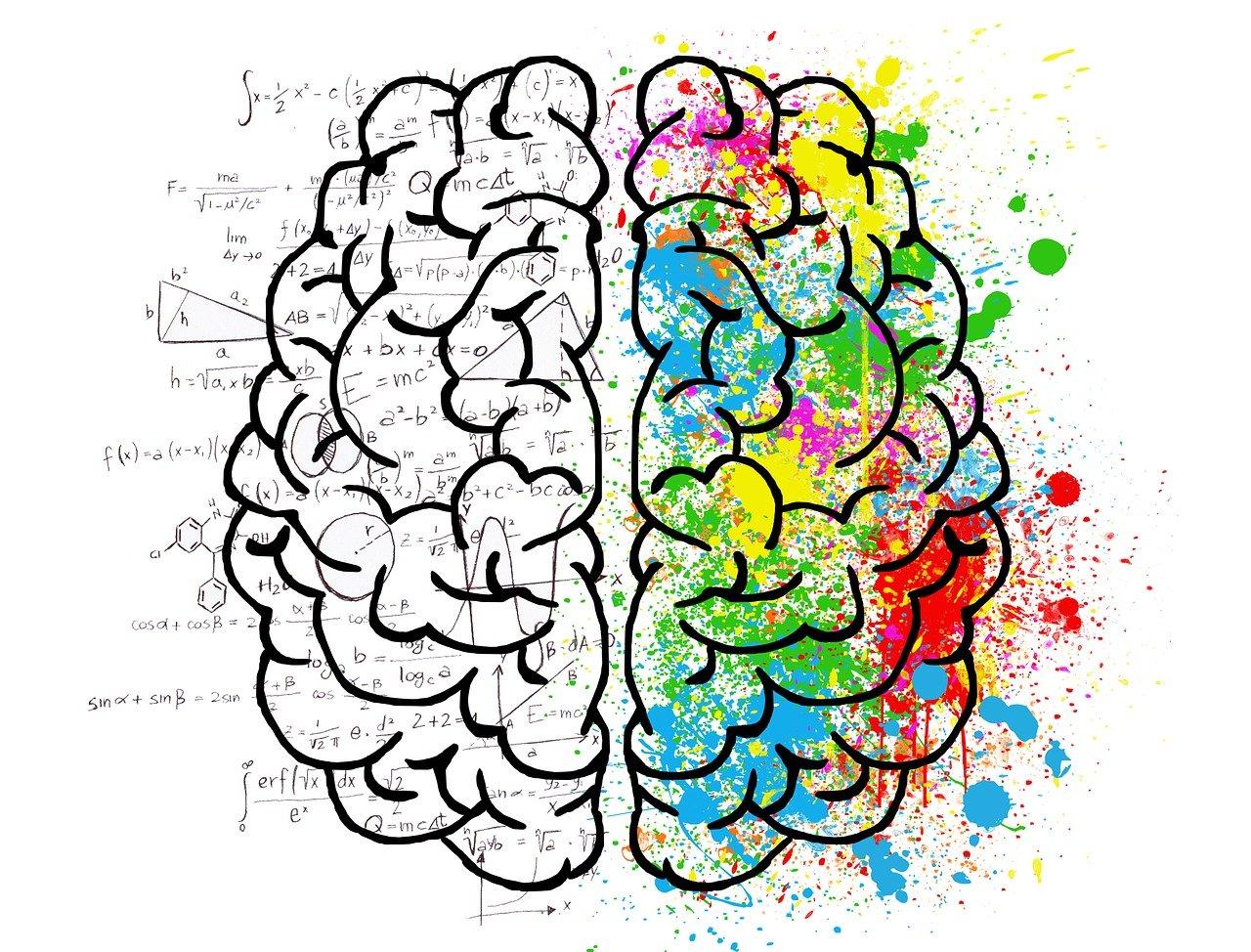 Ученым удалось исследовать тайную зону мозга человека