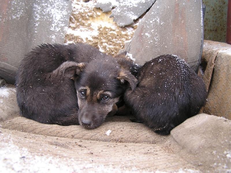 Бездомные животные // Фото: Global Look Press