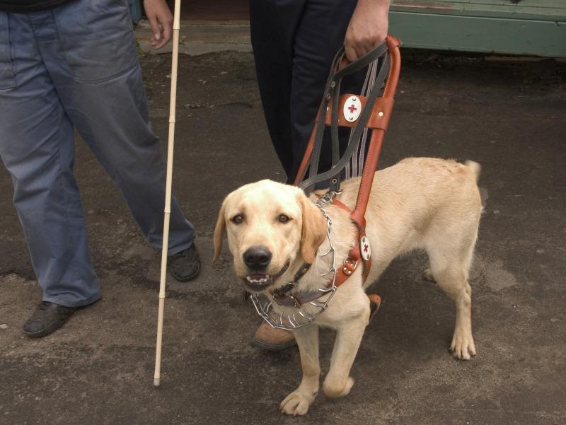 Кондуктора и пассажиров не остановило то, что собаки-поводыри по правилам провозятся бесплатно // Фото: Наталья Логинова / Global Look Press
