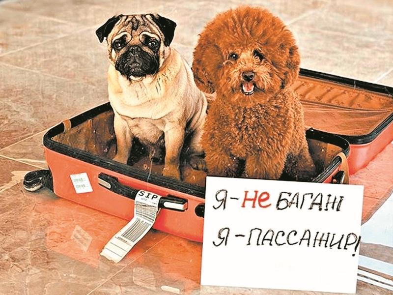 Флешмоб «Я – не багаж. Я – пассажир» // фото в статье: соцсети