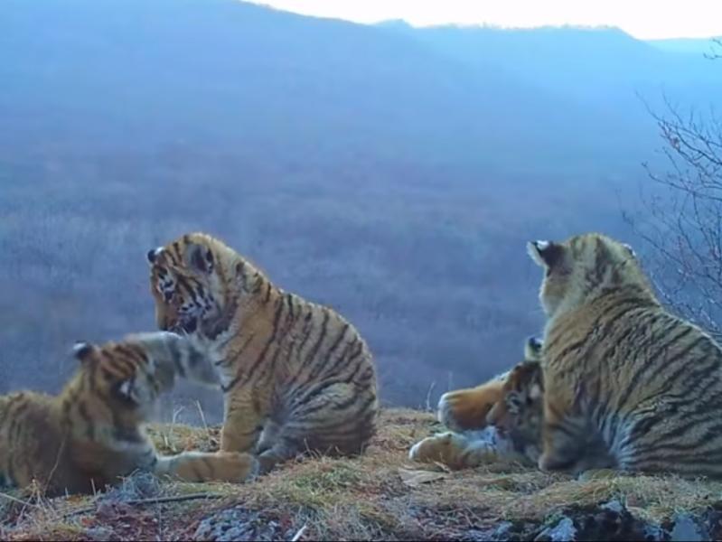 "стоп-кадр / Youtube / канал ""Земля Леопарда"""