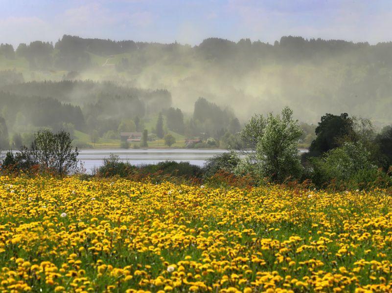 Если вы первым делом заметили на этом фото не цветы, а облака пыльцы – этот материал для вас // фото: Karl-Josef Hildenbrand / dpa / Global Look Press