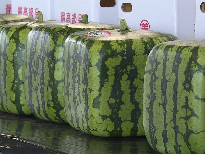 Японские квадратные арбузы. Вы тоже можете вырастить такие! // стоп-кадр / канал RTR Japan