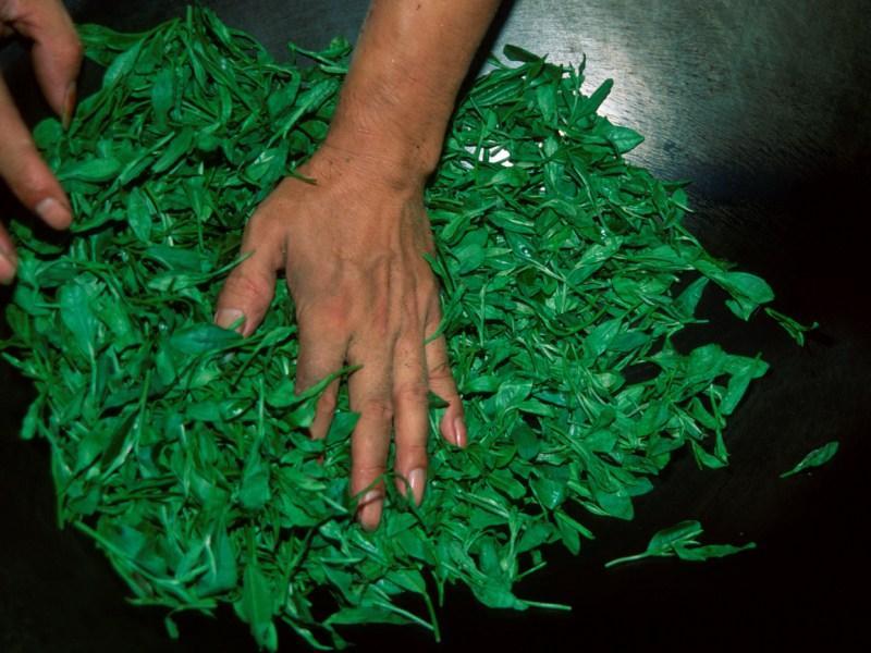 Зеленый чай результативно борется сраком— Ученые