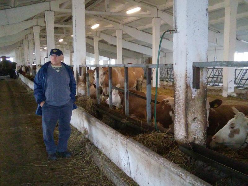 Лужков с коровами-симменталами