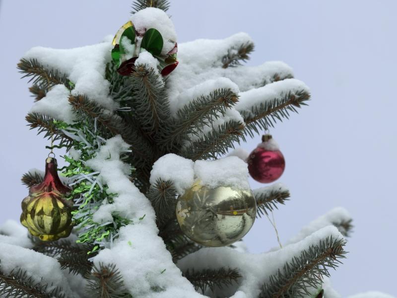 Власти будто меряются: чья ель выше, круче и дороже // фото: Николай Гынгазов / Global Look Press
