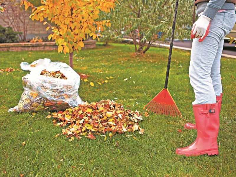 Варварское сгребание листьев в городах – больная тема для экологов, биологов и просто неравнодушных людей // Фото: Shutterstock