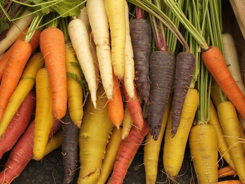 Морковь бывает и желтого, и даже фиолетового цвета – а когда-то только такой и была // Фото: Global Look Press
